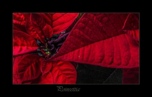 A red glow by Mavis
