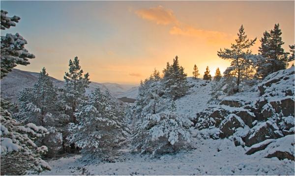 Seasonal Spectacular by MrBlueSky