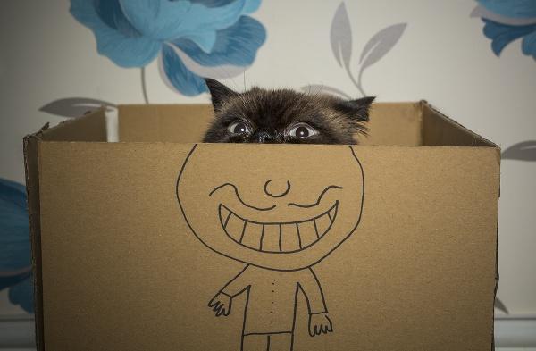Top Cat by sitan1