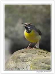 lancashire wildlife