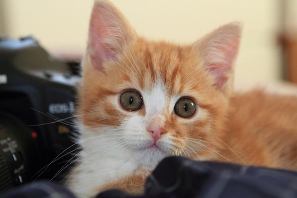 meet tiggs erescue kitten by steve486