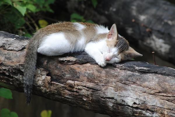 Sleeping Beauty! by Chinga