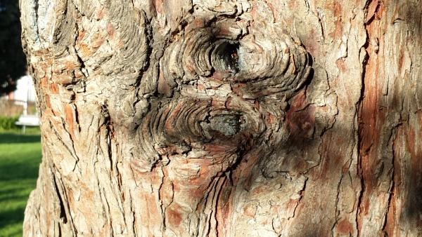 "Wood \""Skin\"" ... by Chinga"