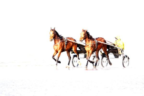 Horses by tjdup