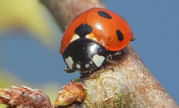 ladybird by paulmanneringphotos