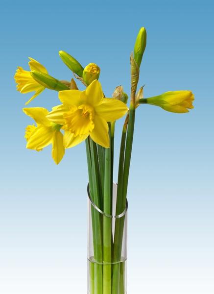 Daffodils by victorburnside