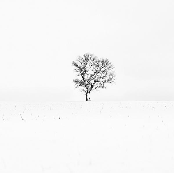 One Tree by rjb25