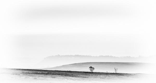 Camomile Hill by richardburdon
