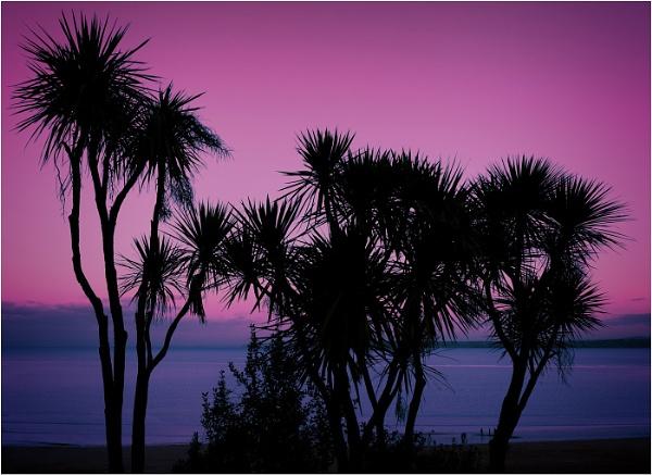 Cornish Palms by ptoshea
