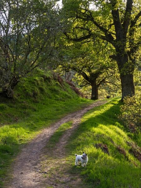 Dog Walk by iainmacd