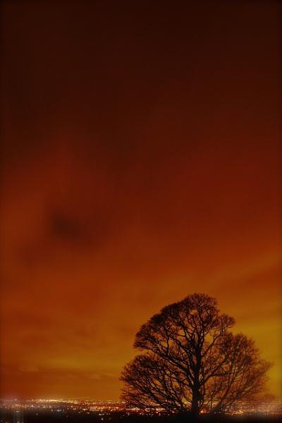 Tree City by Macximilious_XXII