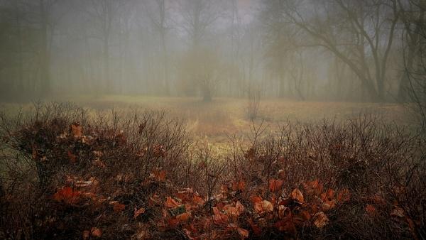 vague awakening-where is winter ? by atenytom