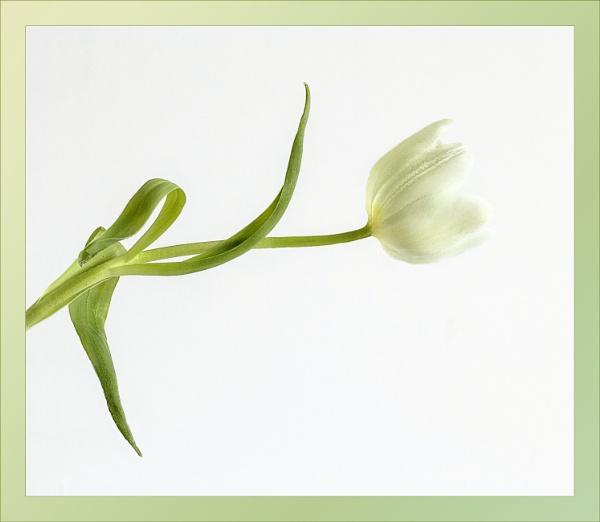 White on White by Irishkate