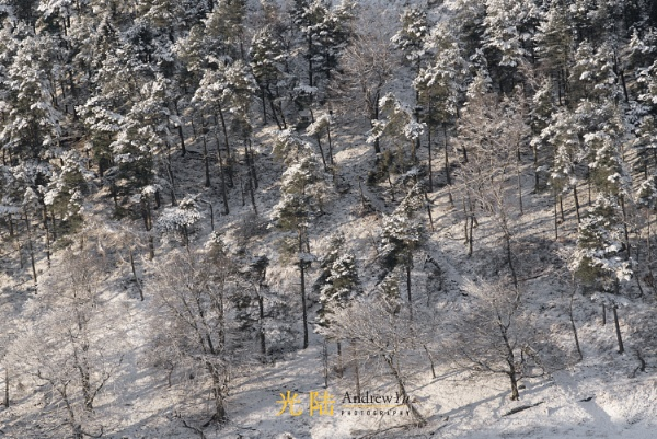 Snow Capped Trees of the Peak District by awhyu