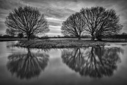 Mono Trees