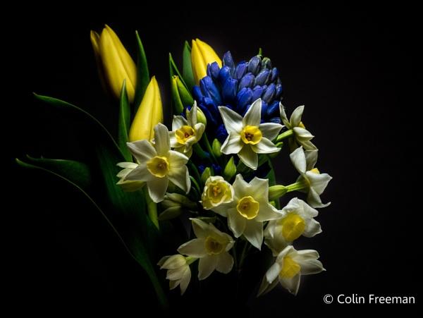 spring flowers by cfreeman
