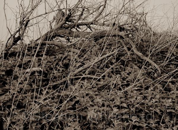 Nettle and Deadwood. by WstepheN