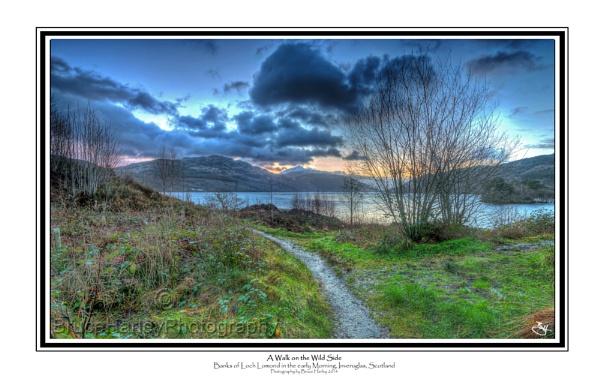 A Walk on the Wild Side by MunroWalker