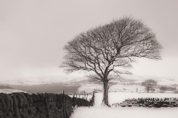 Lone Snowy Tree by iangilmour