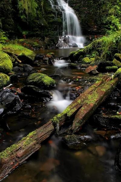 mossy log by davidcollins