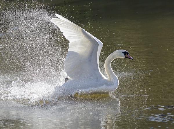 The splash. by JeanE