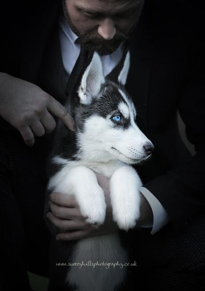 Husky by SurreyHillsMan