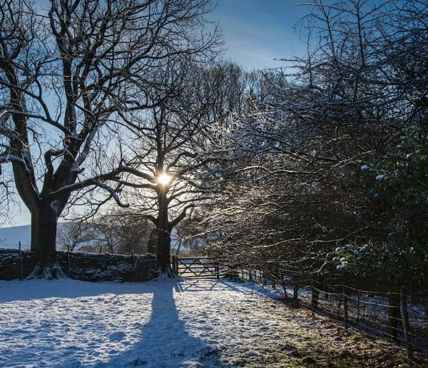 Ice Trees by Trevhas