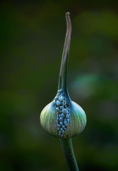 Taken A Leek by abeeror2