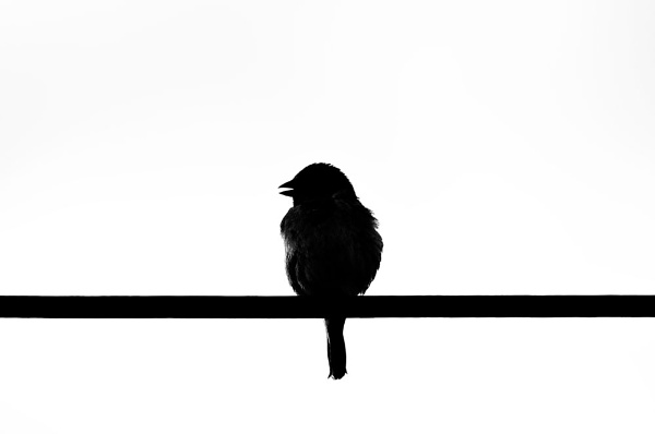 Black and White by Gary_Macleod