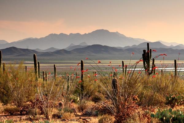 Saguara national park Arizona by rammy62
