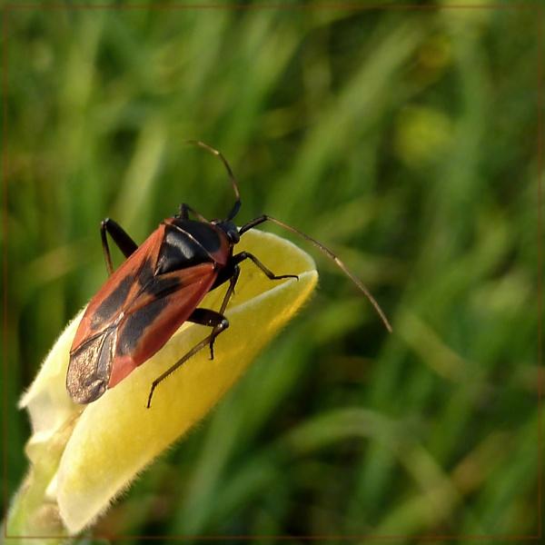 spring bug by CarolG