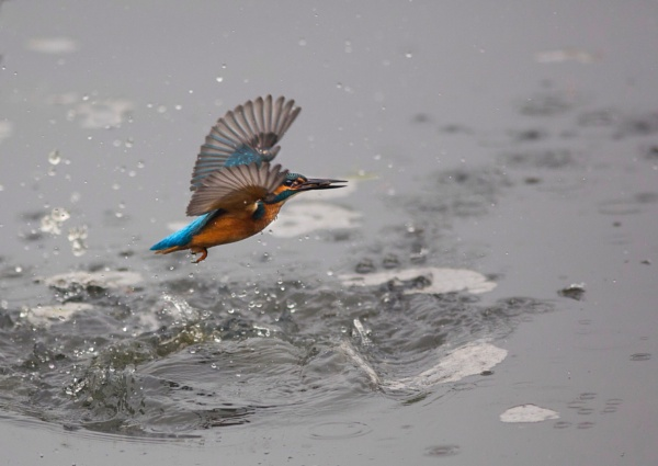 Captured by Kingfisher8
