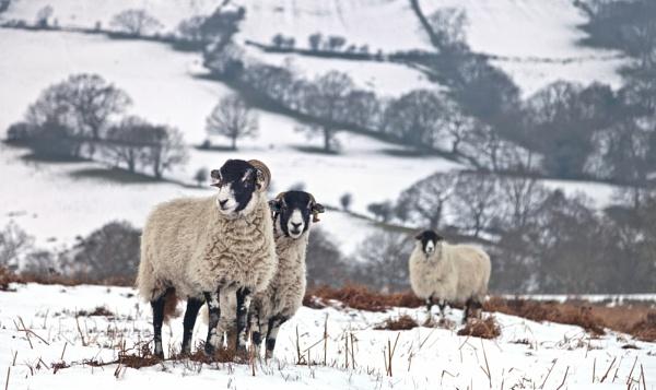 Winter woollens by YorkshireSam