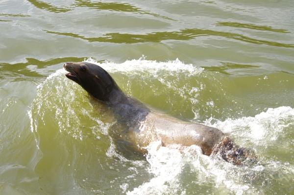 Longleat Seal by TheAviator