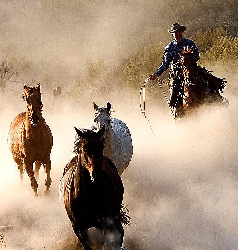картинки дикого запада диких лошадей услуг