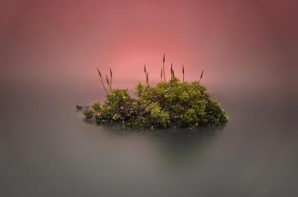 Moss Island by iangilmour
