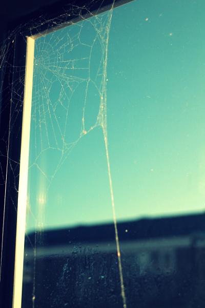 A web of sunshine by jlowen
