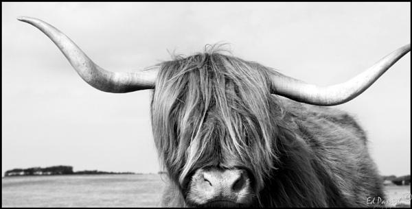 Highland by EDWARDPARRISH
