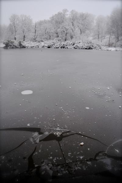 Pond by Macximilious_XXII