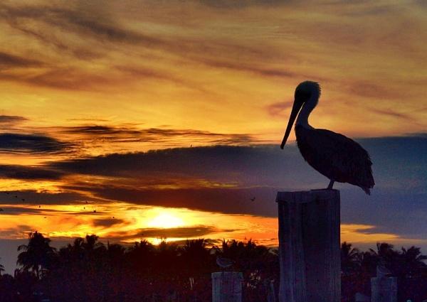 Sunset Sailfish Marina. Nikon D3100. DSC_0133. by rpba18205