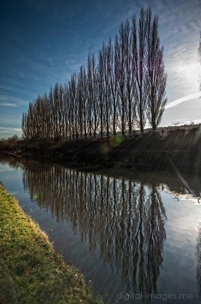 Treeline by Alan_Baseley