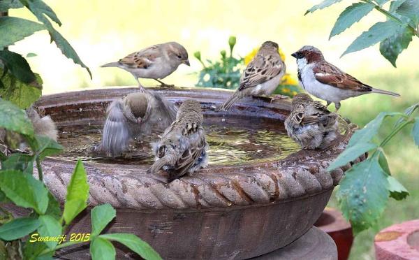 Birdbath by Swamiji