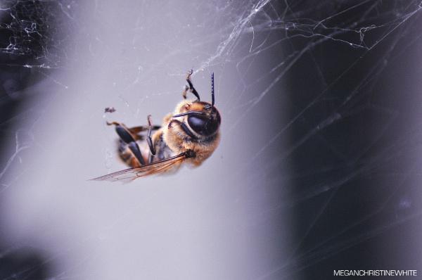 Poor little bee! by Meganwhitephotography