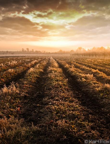 fields of gold by karlfox