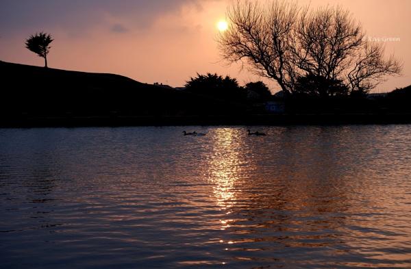 Pond Life by kaz1