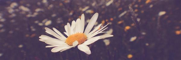 Daisy by ahughes3