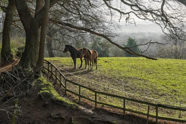 Horses Waiting by stevew10000