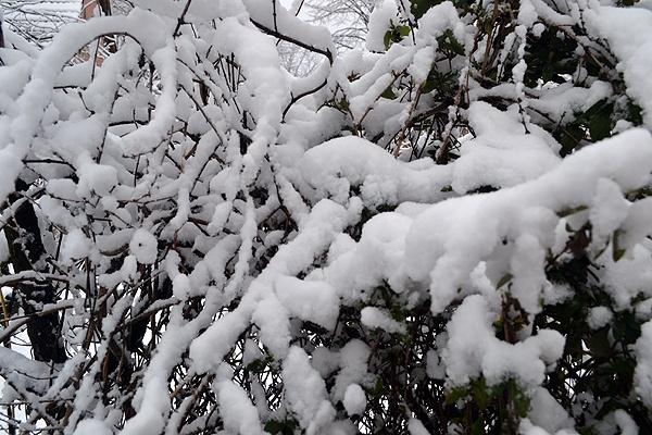 Snow in the bush by Laslo