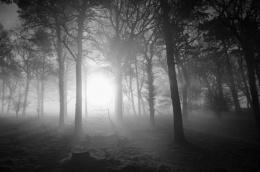 Misty copse