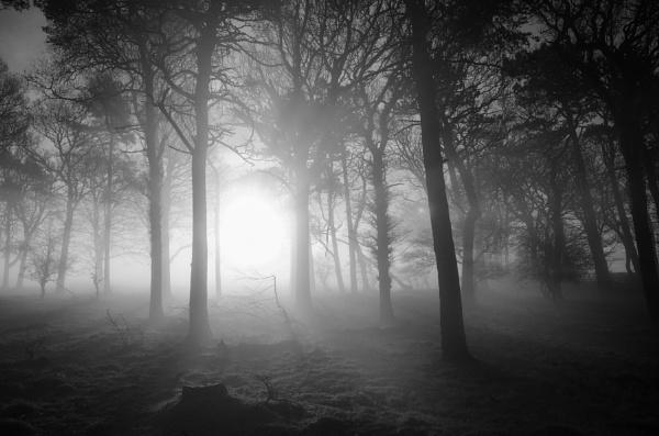 Misty copse by flowerpower59